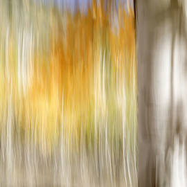 Pando Abstract 4 by Donna Kennedy