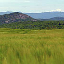 Panoramic of a barley field with Mont Blanc by Gregory DUBUS