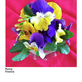 Pansy, Freesia by Betsy Derrick