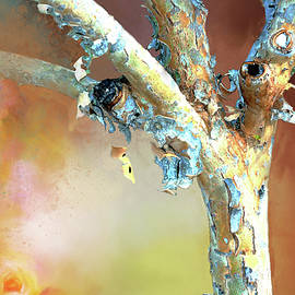 Paper Bark Maple by Linda Cox