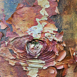 Paperbark Maple Tree Bark Abstract by Tim Gainey