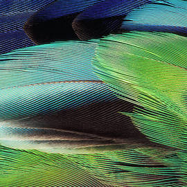 Parrot Feather, Close-up by Danita Delimont