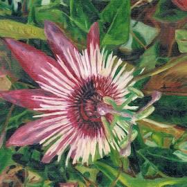 Passion Flower by Helen Sviderskis