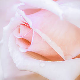 Pastel Pink Rose Water Drops by Julie Palencia