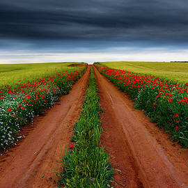 Path between fields by Vicente Sargues