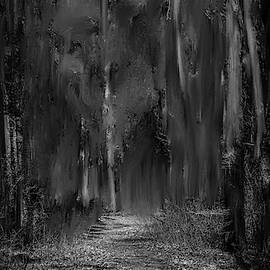 path into fairy forest BW #i6 by Leif Sohlman