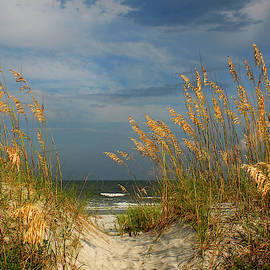 Path to the Ocean by Jerry Griffin