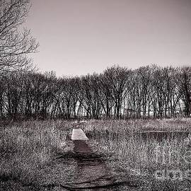 Pathway to the Other Side by Frank J Casella
