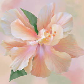 Peach Hibiscus-ii by Shirley Kathan-Sayess