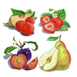 Peach Plum Pear Berries Watercolor  by Irina Sztukowski