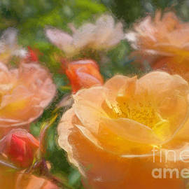Peach Yellow Roses by Jean OKeeffe Macro Abundance Art