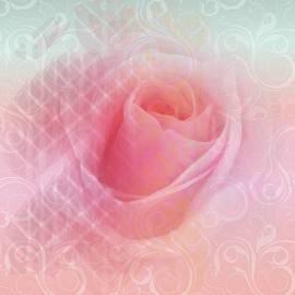 Peachy Rose by Isabella Zietsman