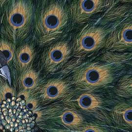 Peacock Fan by Joan Stratton
