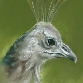 Peahen Portrait by MM Anderson