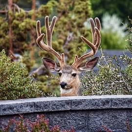 Peek-a-boo by Dana Hardy