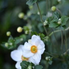 Peekaboo in the Park - Flowers of Summer by Miriam Danar