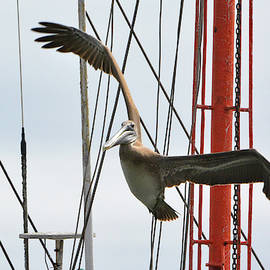 Pelican and Masts by Jerry Griffin