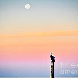 Pelican Moon by Gary Richards