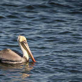 Pelican On Water by Framing Places