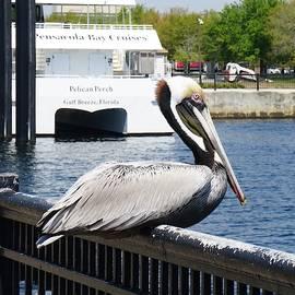 Pelican Perch by Chuck Johnson