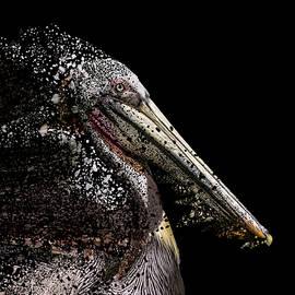 Pelican Puzzle by Bill Posner