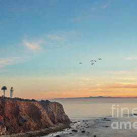Pelicans at Point Vicente Lighthouse by Sarah Ainsworth