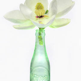 Pepper And Magnolia Still Life by JC Findley