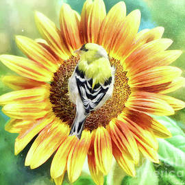 Perched On The Sunflower by Tina LeCour