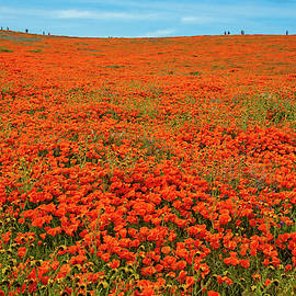 Perspective - Superbloom 2019 by Lynn Bauer