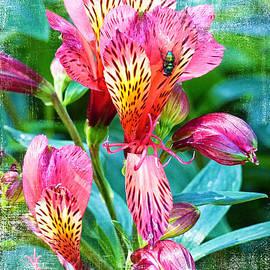 Peruvian Lilies by Trudee Hunter