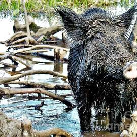 A Little Mud on a Pig by Suzanne Wilkinson