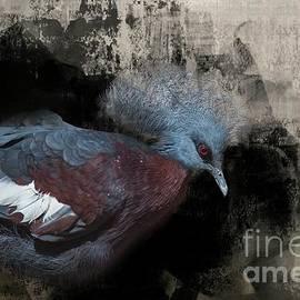 Pigeon Queen by Eva Lechner