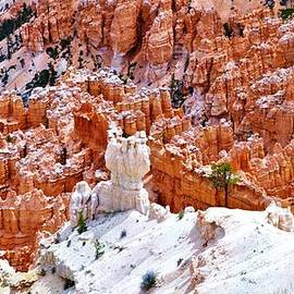 Pillars in Bryce by Suzanne Wilkinson