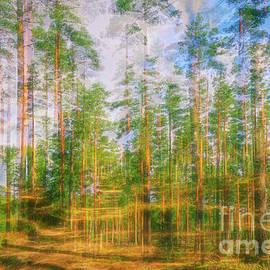 Pine land 3 by Veikko Suikkanen