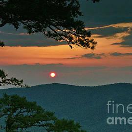 Pine Tree Sunset by Dale Kohler