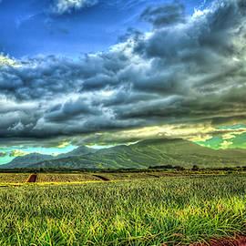 Pineapples Sunning Dole Plantation Wahiawa Oahu Hawaii Farming Landscape Art by Reid Callaway