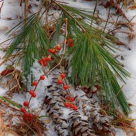 Pinecones and Holly Berries by Mike Griffiths