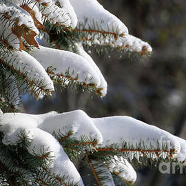 Pines-8692 by Gary Gingrich Galleries