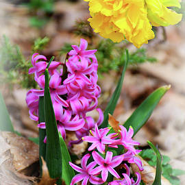 Pink And Yellow Garden Flowers by Constance Lowery