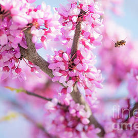 Pink Blossoms on Blue with Honeybee by Anthony Morrison