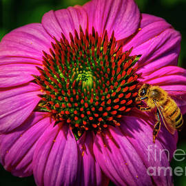Pink Coneflower and a Bee by Janice Pariza