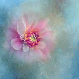 Pink Dahlia on Blue by Terry Davis