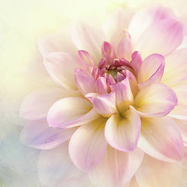 Pink Dipped Dahlia by Terry Davis