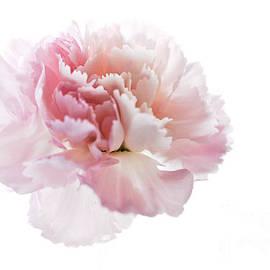 Pink Elegance by Deb Halloran
