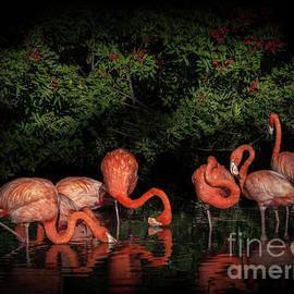 Pink Flamingo Heaven 2 by Liesl Walsh