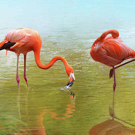 Pink Flamingos by Isabela and Skender Cocoli