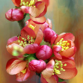 Pink Flowering Quince 2 by Isabela and Skender Cocoli