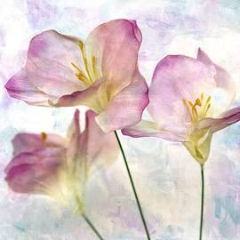 Honey Malek - Pink Hyacinth III