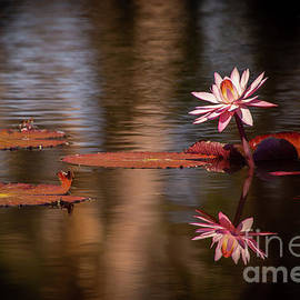 Pink In The Morning Light by Sabrina L Ryan