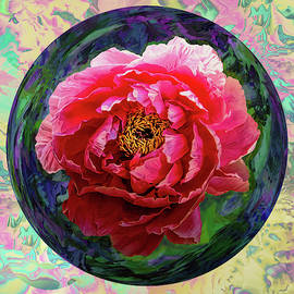 Pink Japanese Peony-color background by Grace Iradian